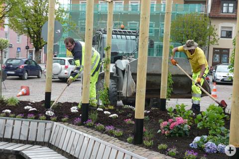 Bauhofmitarbeiter Daniel Gugel und Bauhofgärtner Wadah Berki beim Bepflanzen der Blumenrabatte